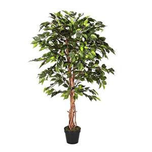 生木・植物